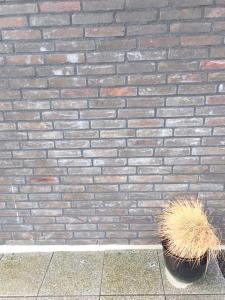 Skitten murstein, beskjemt av mørtelslør